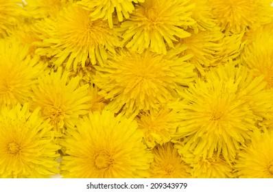 Flowers dandelions.