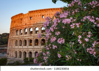 Flowers at dawn in front of the Colosseum in Rome