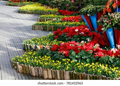Flowers decoration on wall & street during flower festival in Vietnam