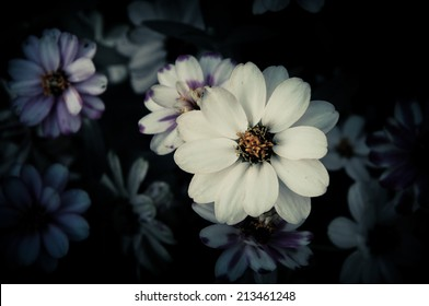 Flowers in the design of natural dark tones. The image is the art