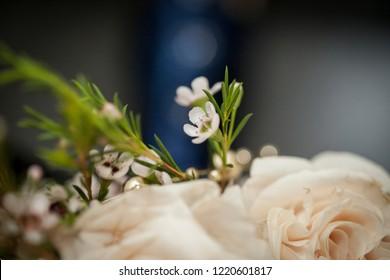 Flowers detail shots