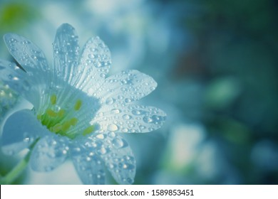 flowers with dew drops. close-up.