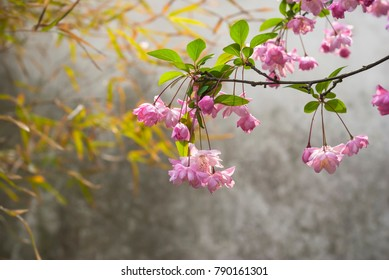 Flowers in early spring, located in Suzhou, Jiangsu, China.