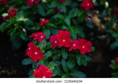 Flowers in Enoshima