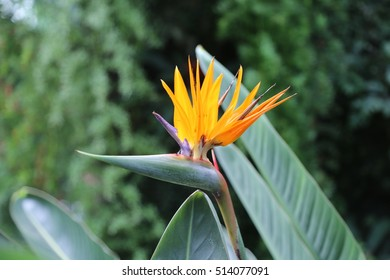 Flowers exotic