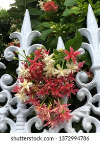 Flowers are at the fence. Combretum indicum, also known as the Chinese honeysuckle or Rangoon creeper, is a vine with red flower clusters and is found in Asia.