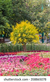 Flowers Festival 2016 is one of the biggest flower festival in Thailand.