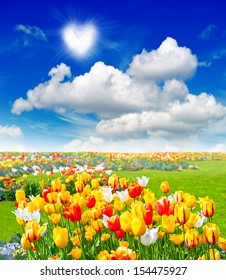 flowers field with colorful tulips in green grass. spring landscape with sunny blue sky
