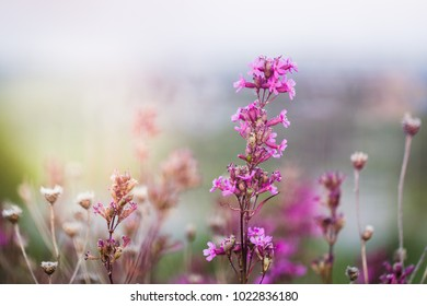 Flowers in field in morning. Nature outdoor view