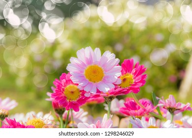 flowers in the field on a natural green background