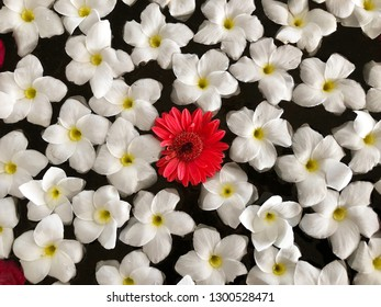 Flowers floating in bowl of water.