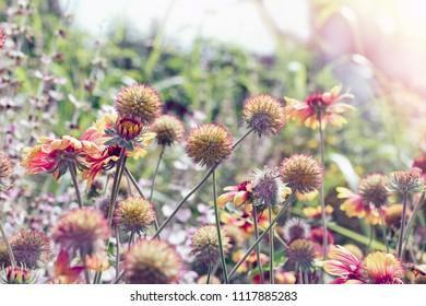 Flowers in flower garden, beautiful yellow flowers - flowering in summer