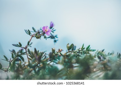 Flowers in fog. Nature view