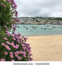 Flowers in the foreground of a beautiful view of St Ives beach and harbour. In St Ives, Cornwall, England.