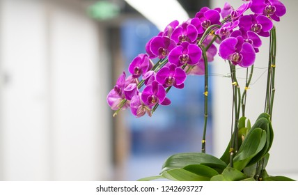 Flowers in the foreground of a modern office