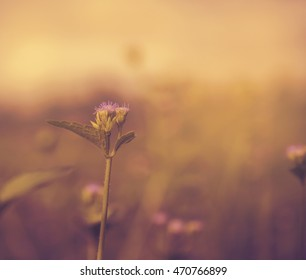 Flowers  in forest