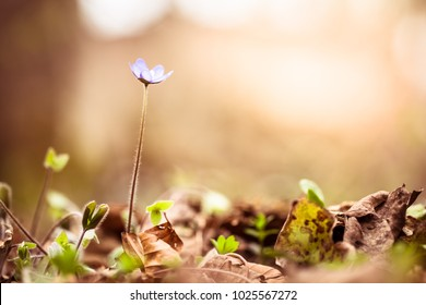 Flowers in forest in morning. Nature