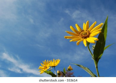 Flowers in front of a blue sky with clouds