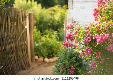 Flowers in front of the wall of old house. Summer landscape. Focus on flowers only.