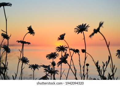Flowers in front of a warm sunset