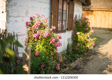 Flowers in front of the windows of old house. Summer landscape.