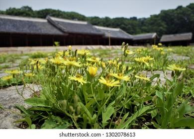 Flowers in front of Yeongnyeongjeon Hall of Jongmyo Shrine in Seoul, Korea