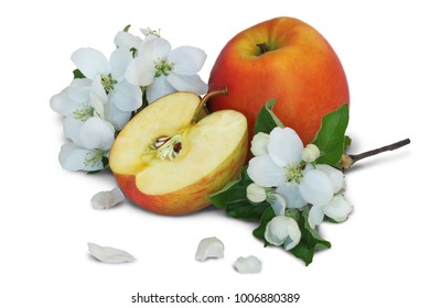 Flowers and fruits of red apple isolated on white background.