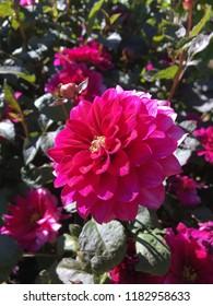 Flowers in a garden.