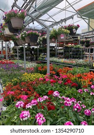 Flowers in the Garden Center of Home Depot in Spartanburg, South Carolina on March 39, 2019