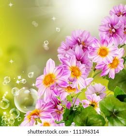 Flowers garden decorative border
