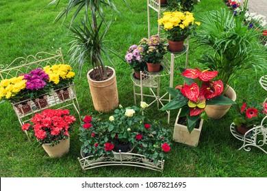Flowers in the garden for landscape design in homestead
