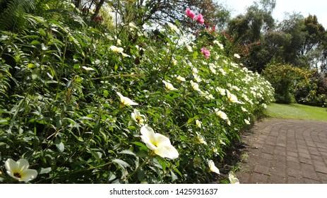 Flowers in the garden at Nusantara Flowers garden