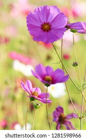 the flowers in the garden on sumer