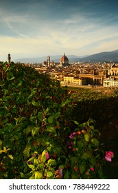 Flowers in a garden at Piazzale Michelangelo with Cityscape of Florence on background. Italy.