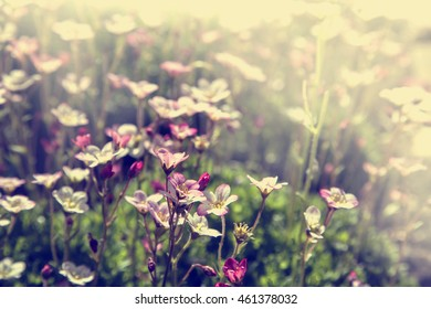 Flowers in the garden, pink flowers on colorful background - macro photo, Abstract flower theme with nature bokeh.