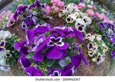 Flowers in a garden shot by an ultra wide lens