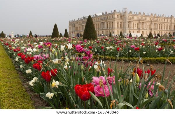Gardens Of Versailles Flowers 5