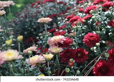 Flowers At Garvan Woodland Gardens