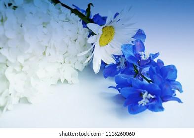 Flowers. Gradient backraund