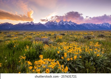 Flowers of  Grand Tetons National Park