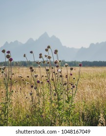 Flowers & the Grand Tetons in Wyoming