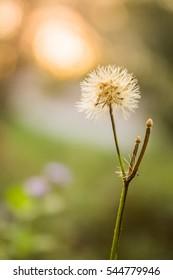 Flowers Grass along the bokeh macro environment evening. Light brown, soft, beautiful light.