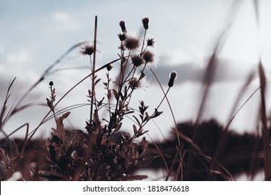 Flowers and grass in autumn, sepia toned