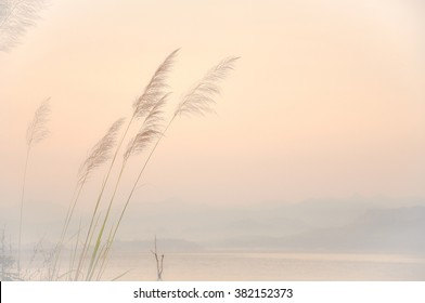Flowers grass blurred bokeh background vintage