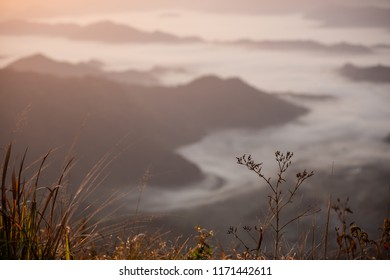 Flowers and grass in foreground with blur fog among mountain  in background at dawn