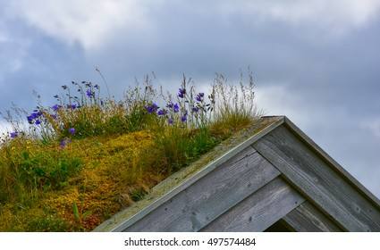 Flowers and grass on the roof of an old barn