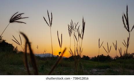 Flowers, grass, sky, mountains sunset