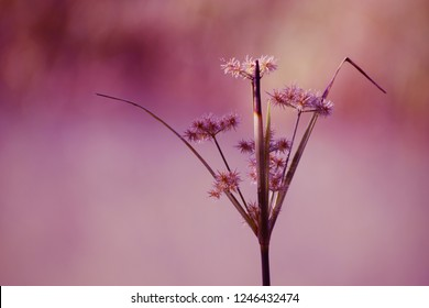The flowers of the grass that grow naturally