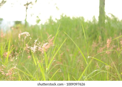 Flowers and grasses with soft blur