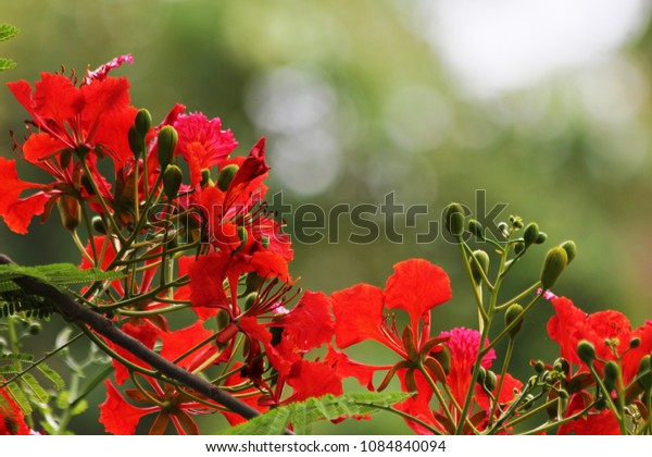 Flowers and green bokeh.